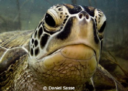 Hey Dude! Green Turtle. by Daniel Sasse 